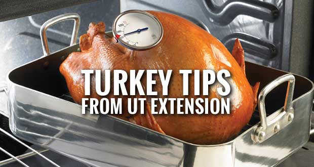 Turkey Tips from UT Extension