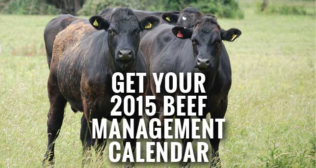 2015 Beef Management Calendar Available from UT Extension