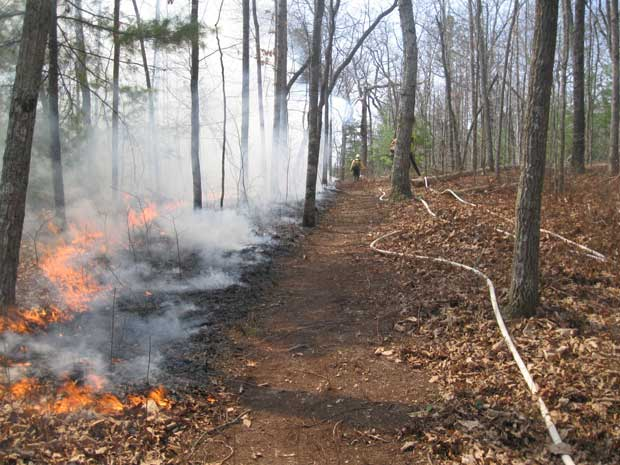 Great Smoky Mountains Prescribed Burn