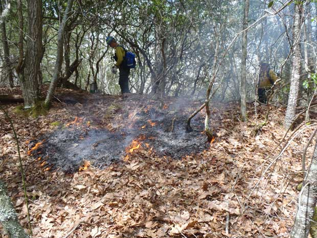 Wildland Firefighters monitor a prescribed burn in the Catalooch
