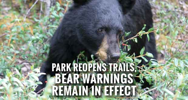 Mt. Le Conte Backcountry Shelter and Cliff Tops Trails Reopen after Bear Euthanized