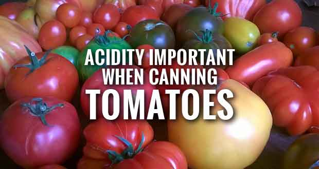 Planning to can tomatoes? Here's what you need to know