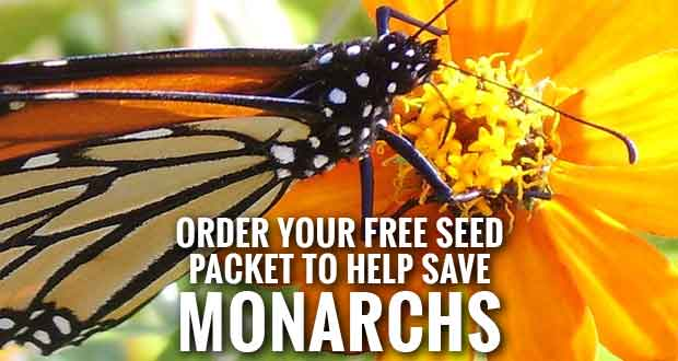 State Urges School Groups, Organizations, Citizens to Join Save the Monarchs Campaign, Offers Free Seed Packets