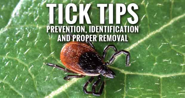Don't Let Ticks Spoil Summer Fun