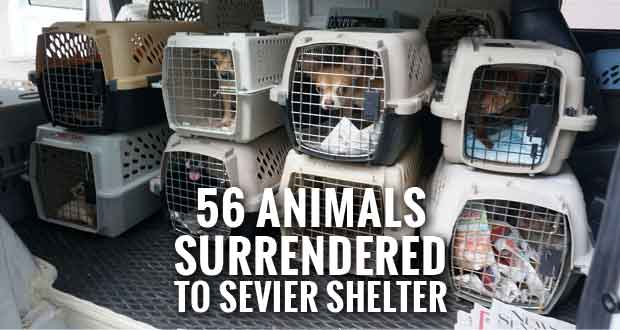 Humane Society Needs Help after Intake of 56 Animals from One Sevier County Home
