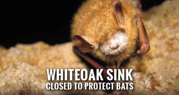 Great Smoky Mountains National Park Closes Area Near Caves to Protect Declining Bat Populations due to white-nose syndrome