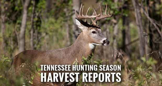 Wildlife Officials Give Harvest Report on Deer, Bear Hunting Seasons, Update on Cougars