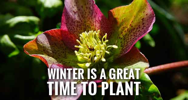 Avoid Cabin Fever with Winter Gardening