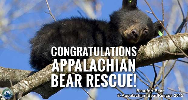 Appalachian Bear Rescue Wins MoonShare Grant from Sugarlands Distilling