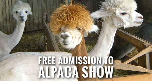 Free Admission and Fiber Art Workshops at Southern Select Alpaca Show in Sevierville
