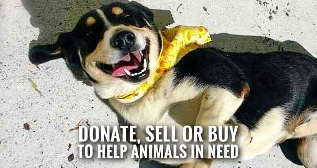 Sevier County Humane Society collecting donations and renting yard sale booth space.