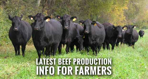 UT Extension to Conduct Southeast Tennessee Beef Summit