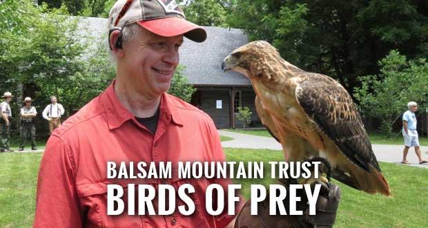 Smokies Hosts Birds of Prey Program at Oconaluftee