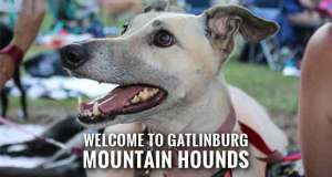 Greyhound Lovers and a Flash of Hounds Gather in Gatlinburg