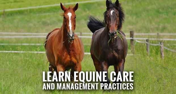 UT Extension to Offer Tennessee Master Horse Program