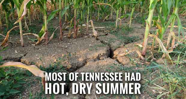 Drought Conditions Bad for Most Gardens, Fruits, Crops and Lawns