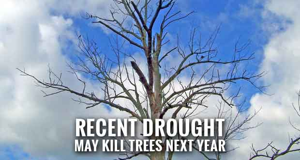 Tips for Choosing Drought Tolerant Trees