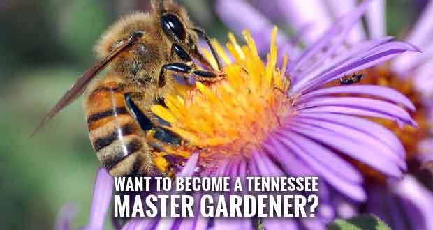 Help Community Gardening, Landscape Programs by Becoming a Master Gardener