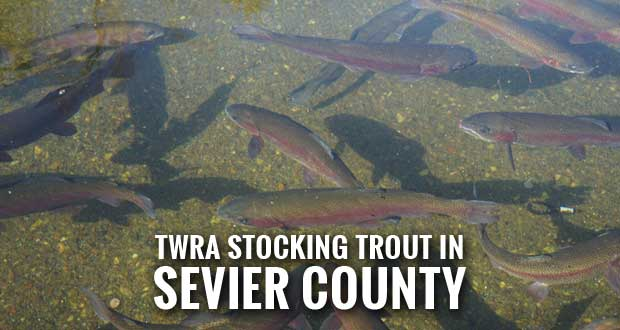 Trout Stocking to Resume in Sevier County after Decades-Old Water Contamination Advisory Lifted