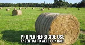 Tips for Controlling Weeds in Tall Fescue Pastures and Hayfields