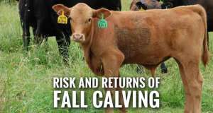 Fall Calving May Yield Higher Returns for Southeastern Beef Producers