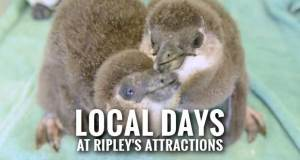 Ripley's Offers $5 Admission Special for Seven East Tennessee Counties