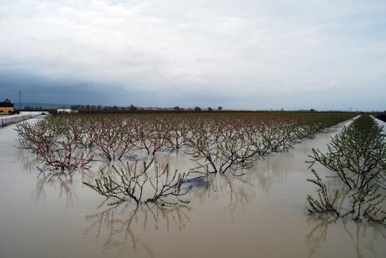 Varias fincas de Tocina han quedado inundadas