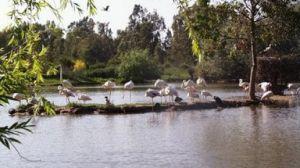 En la Cañada conviven más de 200 especies de aves/andaluciaorg