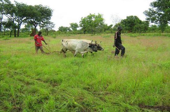Un recorrido por las verdes zonas de Casamance