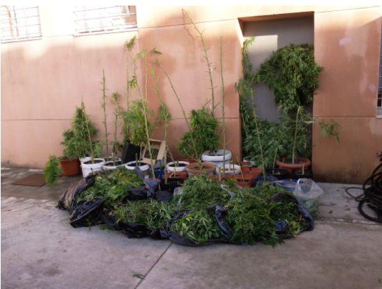 La policía local de Alcalá de Guadaíra incauta 22 kilos de marihuana