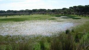 Imagen de la laguna Zahillo en Doñana/Pablo García