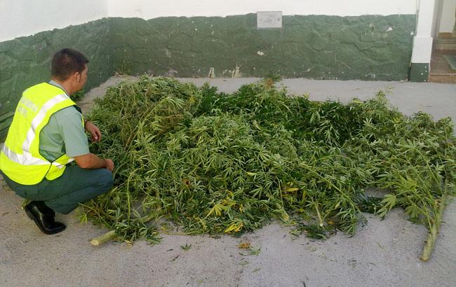 plantaciones-marihuana-gerena-guardia-civil-280911