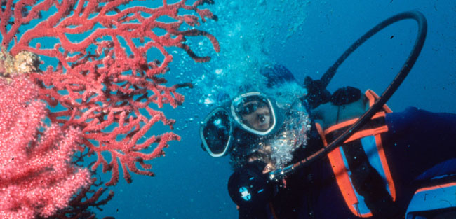 buceo-us