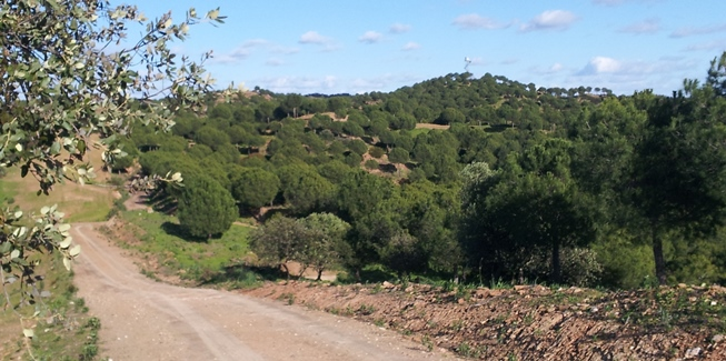 Hacemos una ruta de 20 kilómetros en bici por la localidad sevillana de Villanueva del Río y Minas / Ismael Martínez