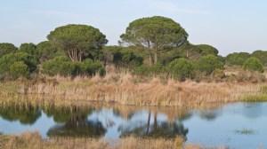 """La Unesco pide al Gobierno español que preserve Doñana ante las """"amenazas"""" que rodean al parque / Sevilla Actualidad"""