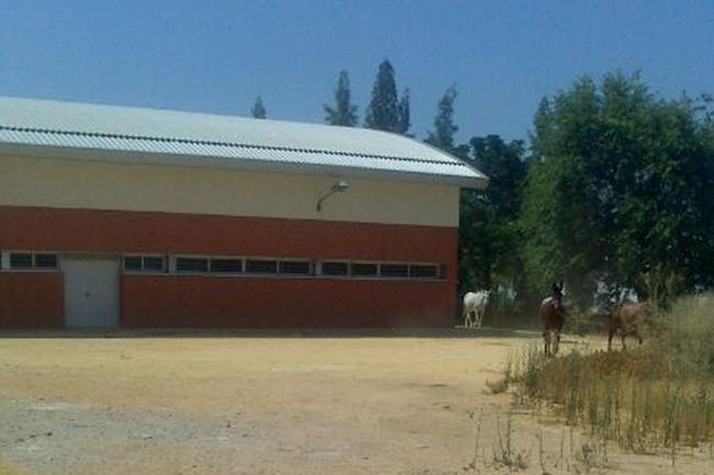 Mulos pastando dentro del Instituo Diego Llorente Los Palacios
