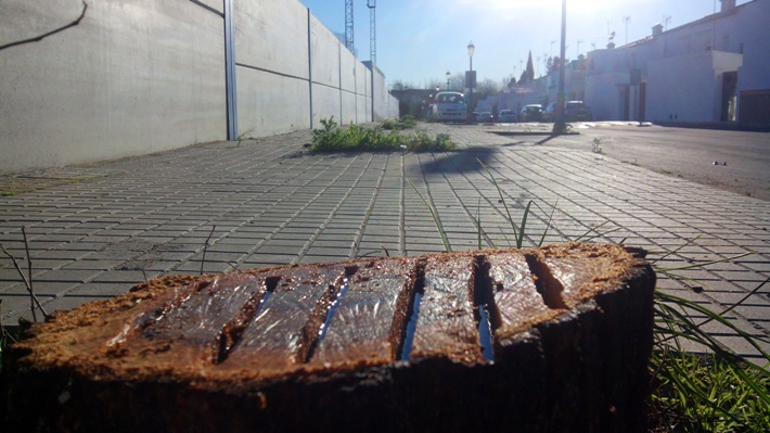 Los troncos de los árboles han sido talados y rociados de gasóleo / Juan Carlos Romero
