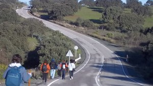 Los peregrinos avanzan por el asfalto de la carretera de Almadén en el tramo de la vía pecuaria usurpado por Cortijo de Campo y la Yerbabuena
