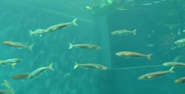 acuario especimenes