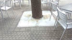 alcorque felipeII