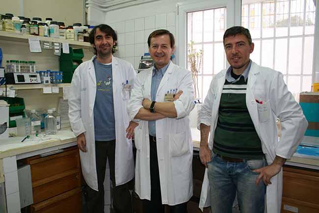 grupo-investigacion-us-leptina