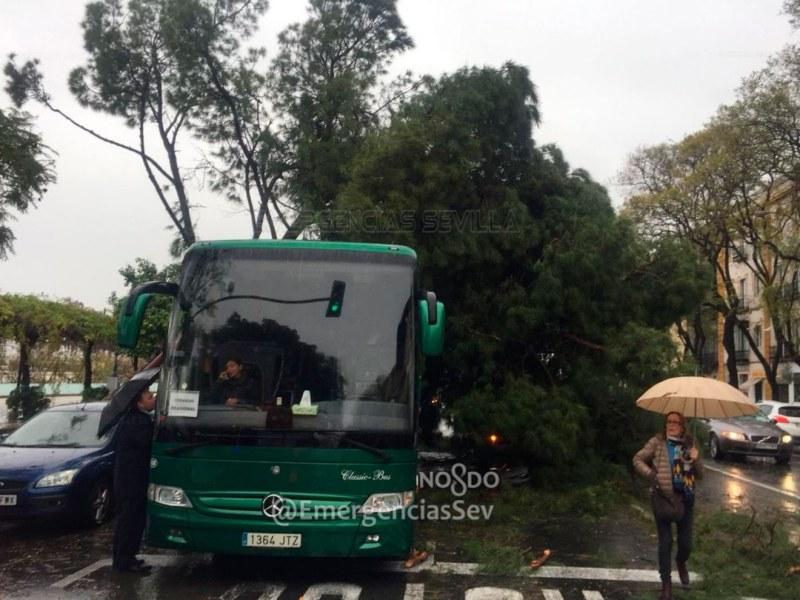 Árbol caído en Paseo Colón /@EmergenciasSev