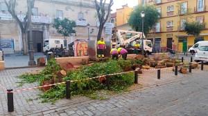 Tala de árboles en el Pumarejo /@Ferpavonher