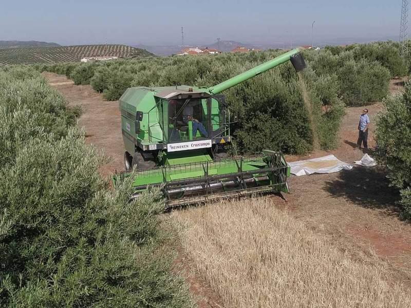 Proyecto Olivo /Heineken