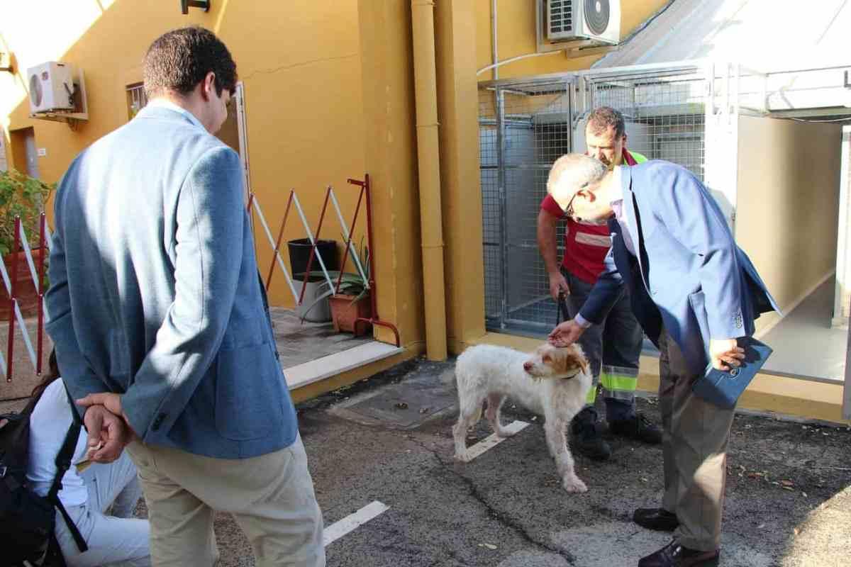 Perros rescatado Centro de Protección y Control Animal / Ayto.