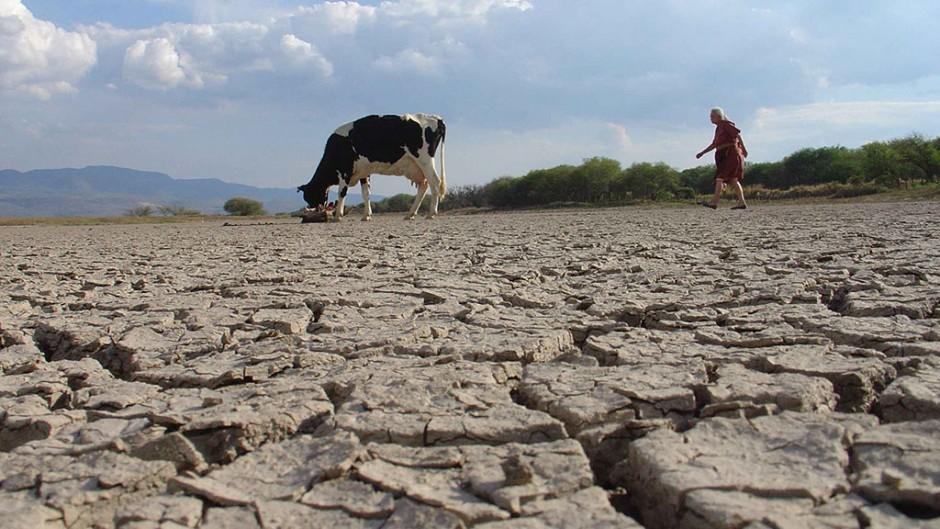 La sequía es una realidad en el campo andaluz.