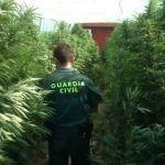 La Guardia Civil desmantela una organización internacional de tráfico de marihuana