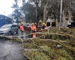 430 incidencias por fuertes rachas de viento en la tarde de hoy