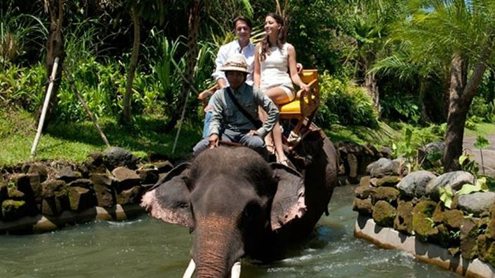 Bali Zoo Elephant Expedition Feature Image