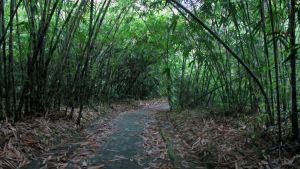 Desa Penglipuran Bangli Bali - Hutan Bambu